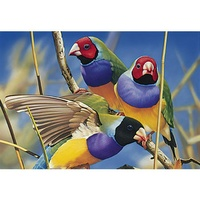 Blue Opal - Australian Geographic Gouldian Finches Puzzle 1000pc